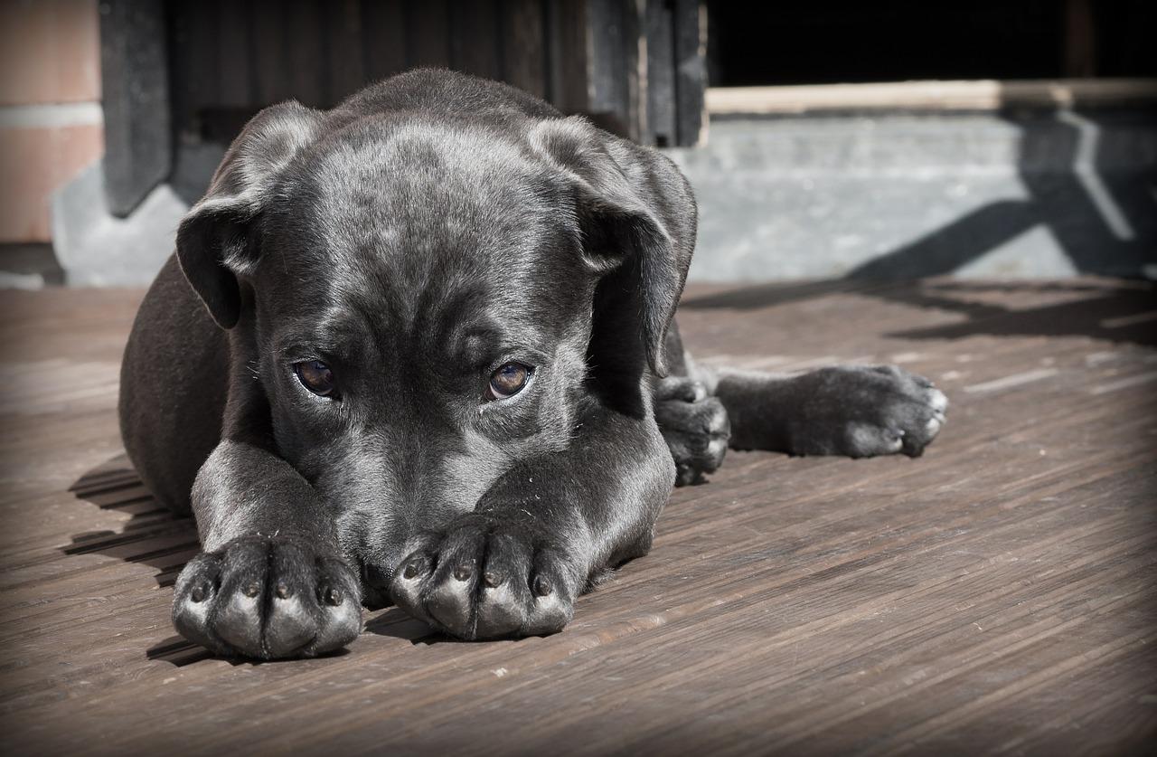 cane-e-paura-del-veterinario