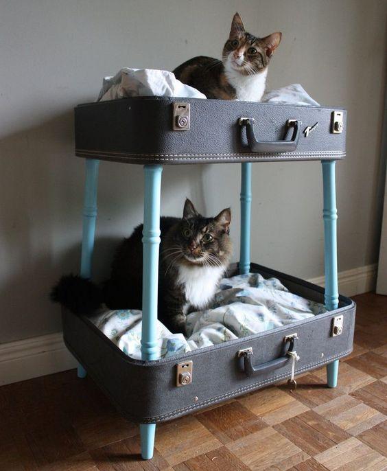 casette-per-gatti