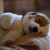 i cani sognano