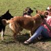 ragazza gioca con cani