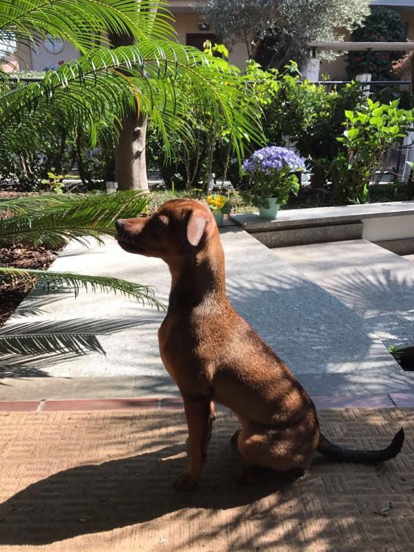 cagnolino seduto in giardino
