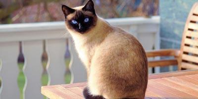 Convivere Con Un Gatto Consigli Utili Per Andare Daccordo
