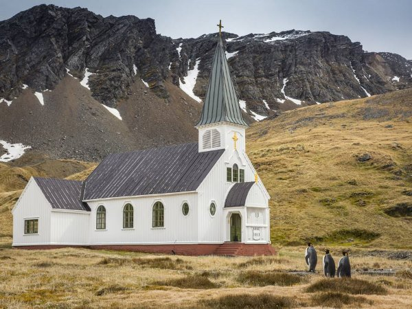pinguini in chiesa