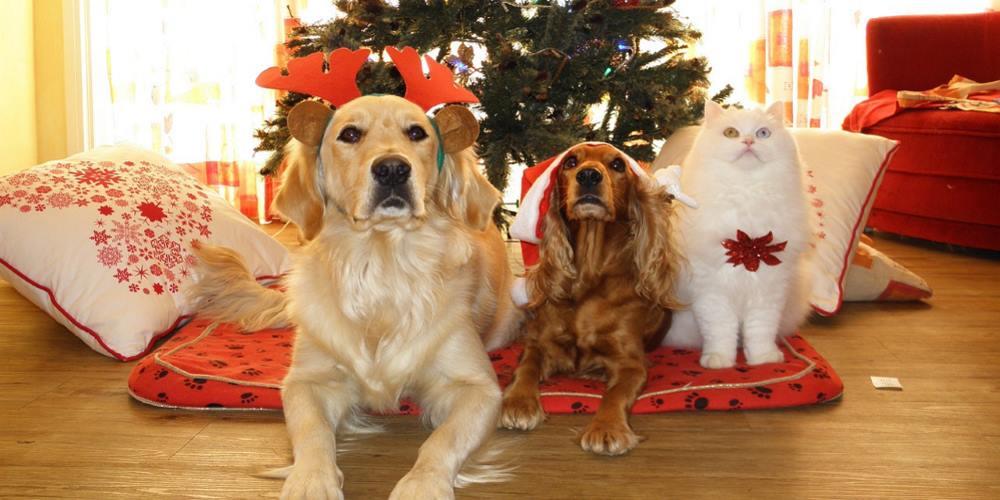 cani e gatto vestiti per Natale