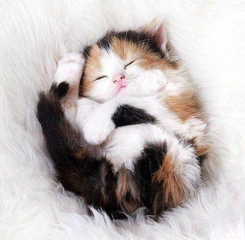 gattino tricolore dorme
