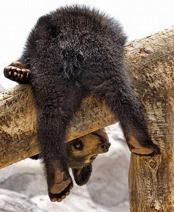 orsacchiotto su albero