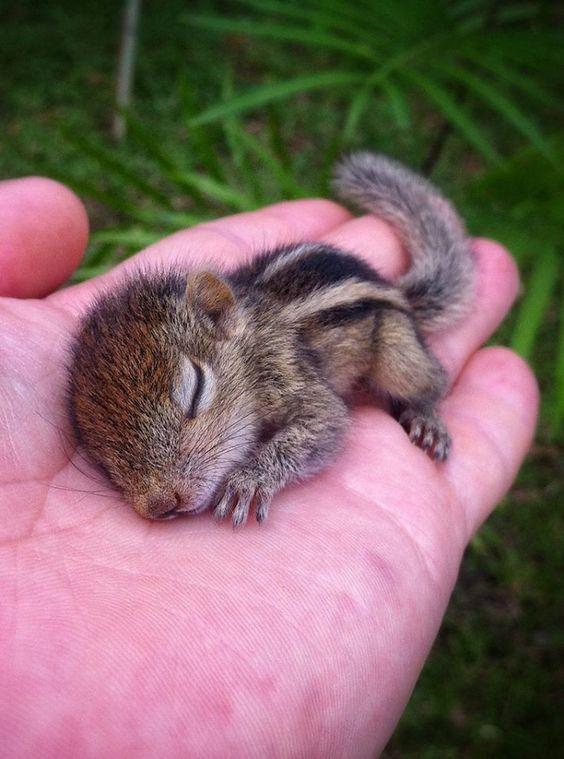 scoiattolo neonato