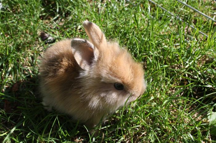 coniglietto marrone su erba