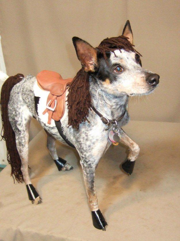 cane vestito da cavallo