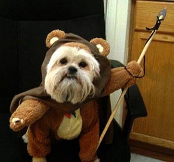 cane vestito da ewok