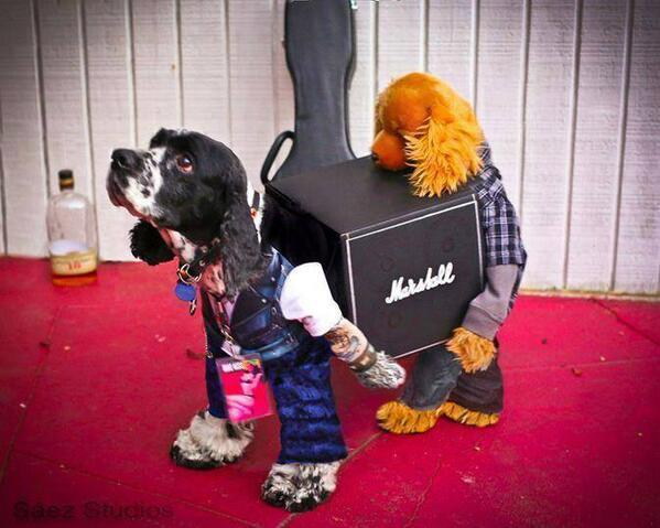 cane vestito da rocker