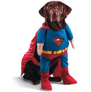 cane vestito da superman
