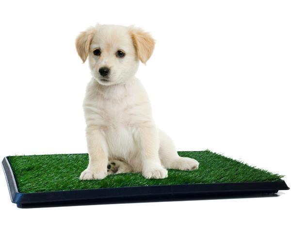 Pad verde con cagnolino