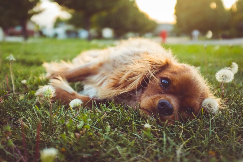 Allergie primaverili: cane gioca nell'erba