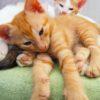 Italia paese pet friendly: gattini
