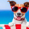 vacanza con cane