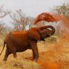 Rivolta degli animali: elefante africano