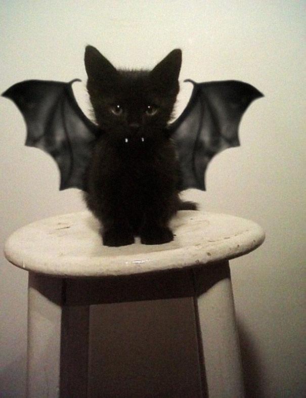Costumi di Halloween per cani e gatti: baby-bat.
