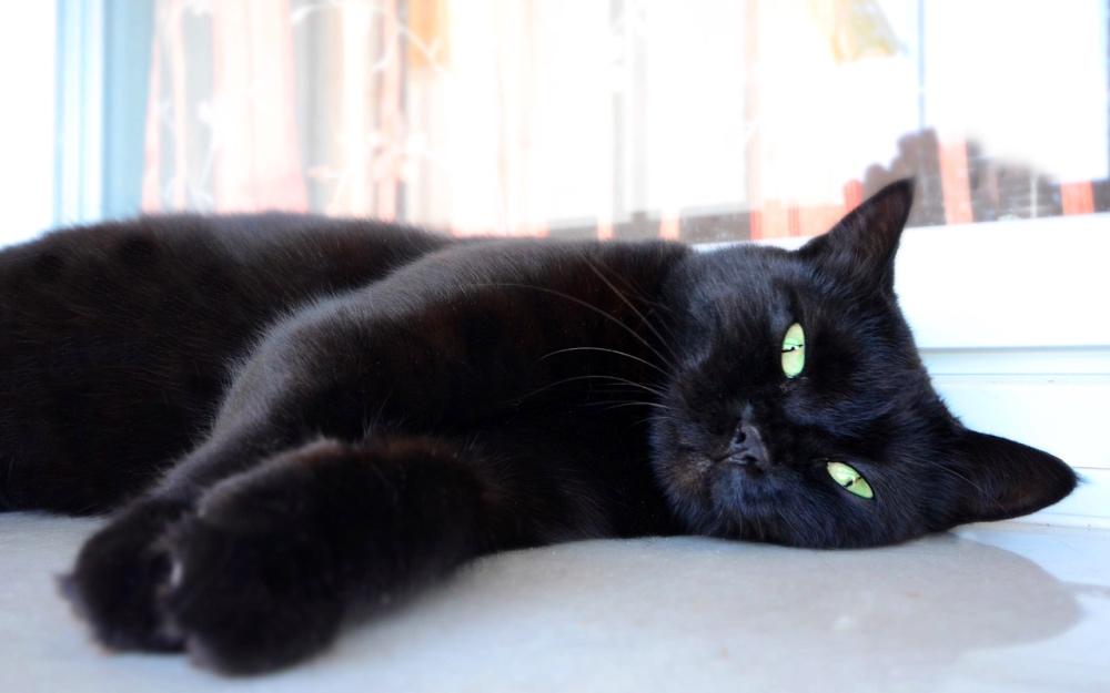 Gatti neri ad Halloween
