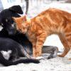 Diabete nel cane e nel gatto.