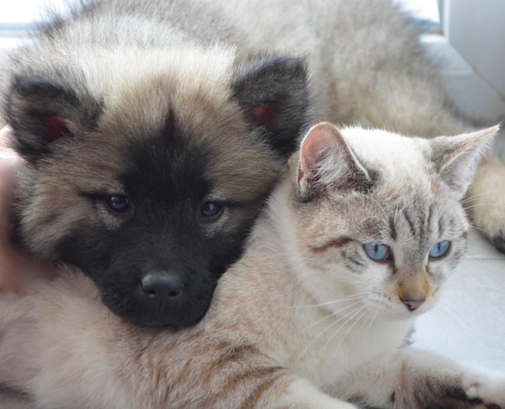 Nuova cura per gli animali feriti.