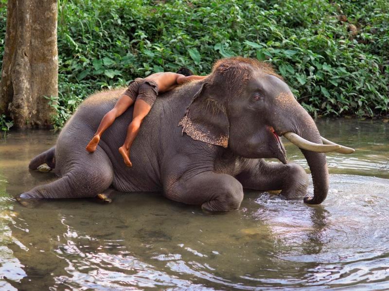 Animals - gli animali di Steve McCurry
