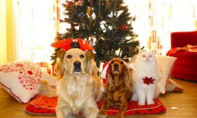 Menu di Natale per cani e gatti.