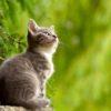 Giornata nazionale del gatto: gatto piccolo