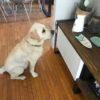 Cosa fa il cane quando il padrone non c'è.