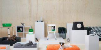 cani e gatti su divani e mobili