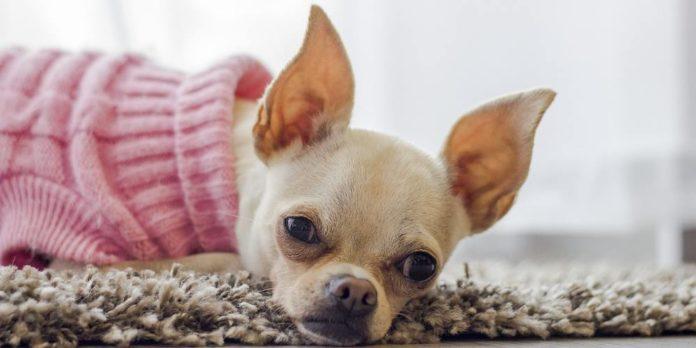 Prezzo di fabbrica 2019 stili di moda più vicino a Abbigliamento per animali: i vestiti per cani sono utili o no?