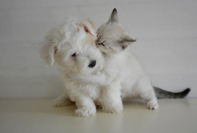 cuccioli cane e gatto bianchi
