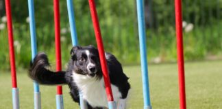cane prova agility Follow Your Pet