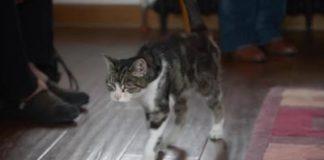 Ritrovare un gatto dopo 13 anni: la gattina Boo.