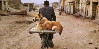 Animals: gli animali di Steve McCurry.