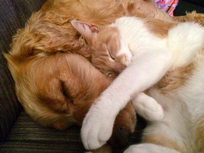 Assicurazione cani e gatti.