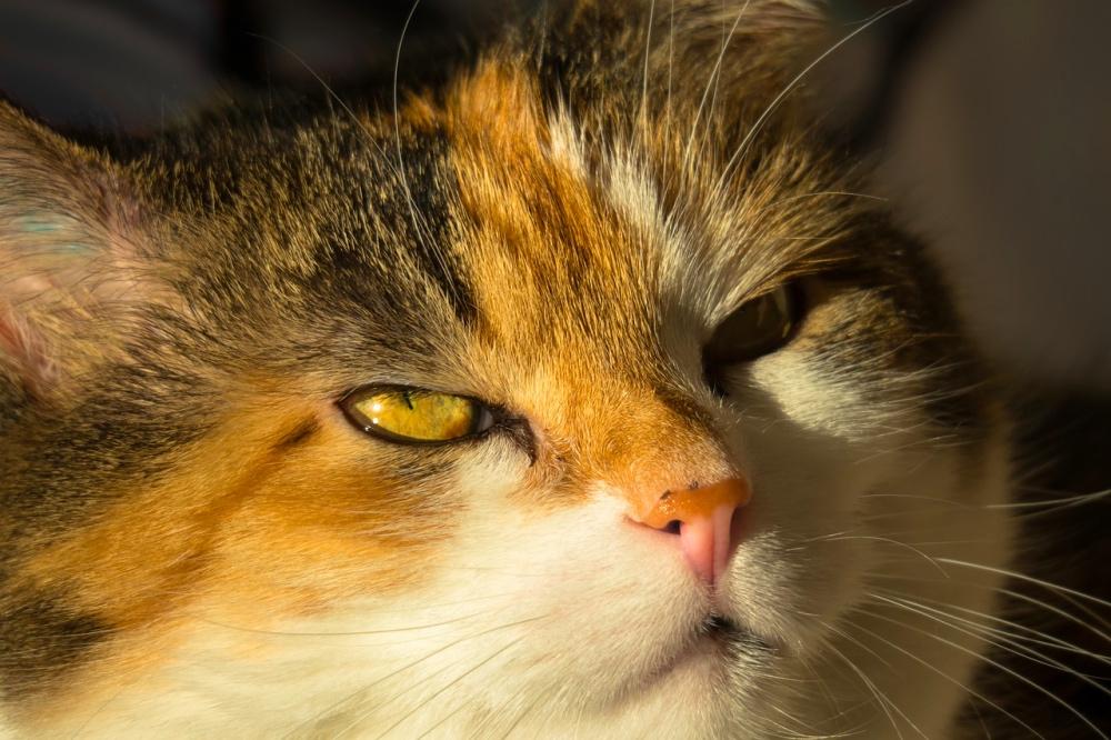 gatti sono schizzinosi