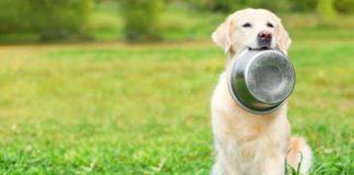 alimentazione-naturale-cani