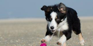 Cani in spiaggia: regole.