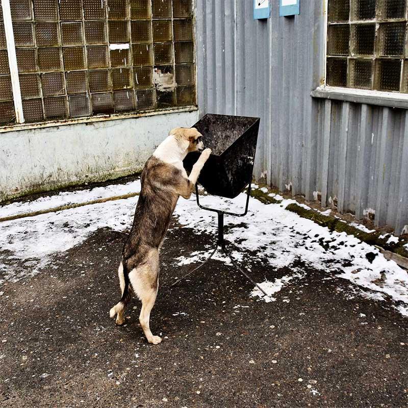 aiutare i cani di chernobyl