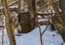 Come aiutare i cani di Chernobyl