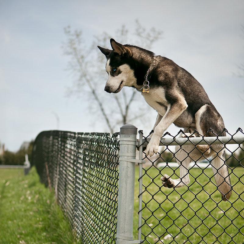 Camminare con il cane in un parco sicuro