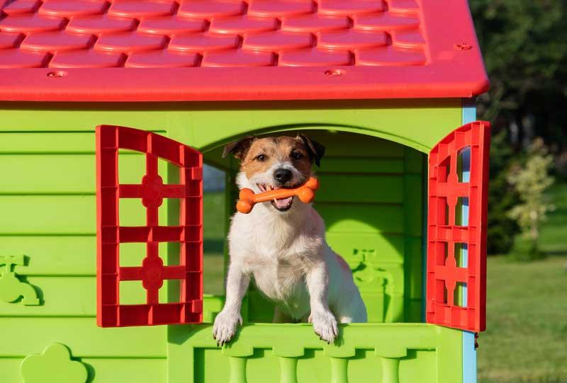 Migliore materiale per la cuccia del cane