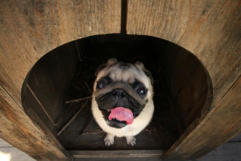 Tipologia di cuccia per cane